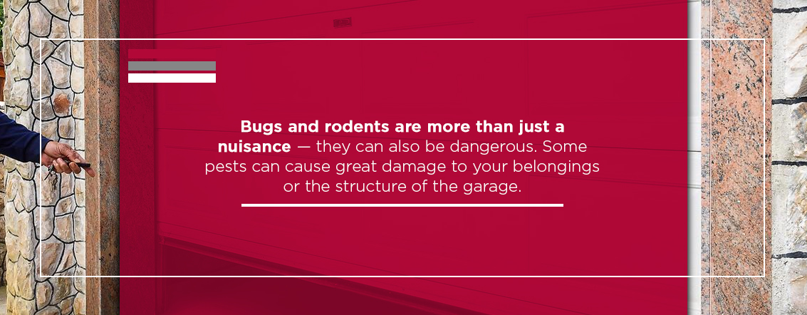 Why-Its-Important-to-Eliminate-Pests-in-Your-Garage